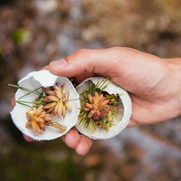 foraging wild ingredients