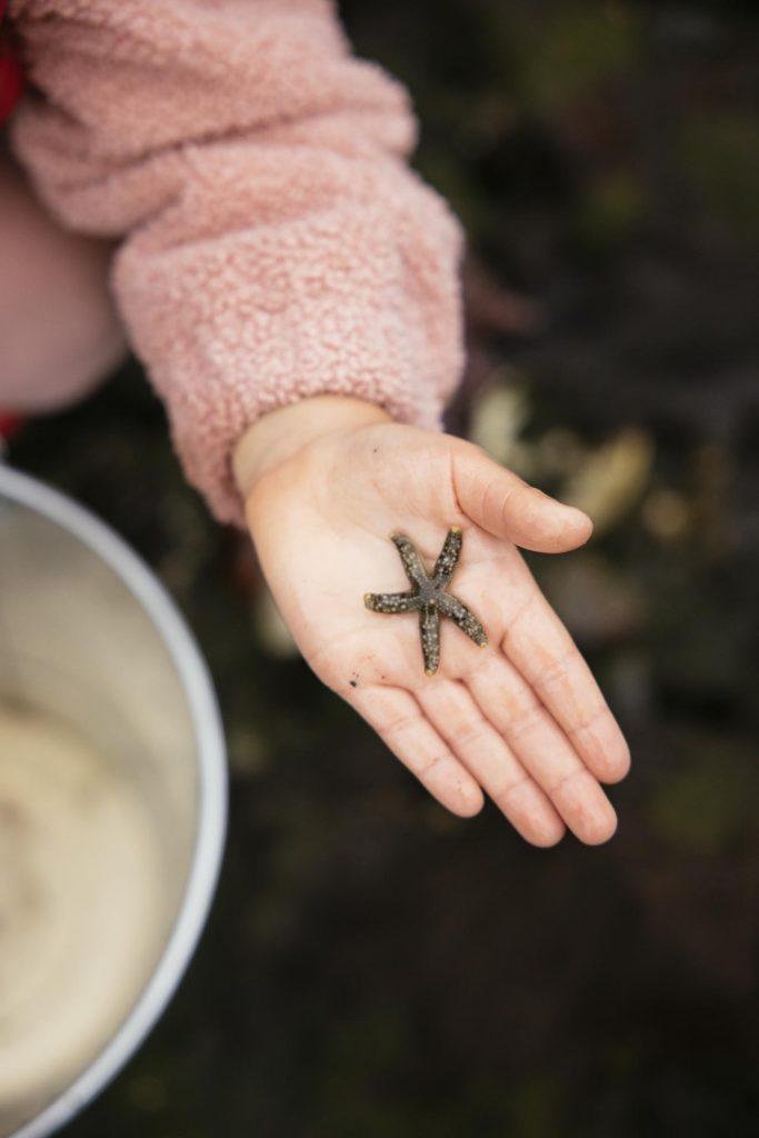 A baby sea star in the palm of a hand