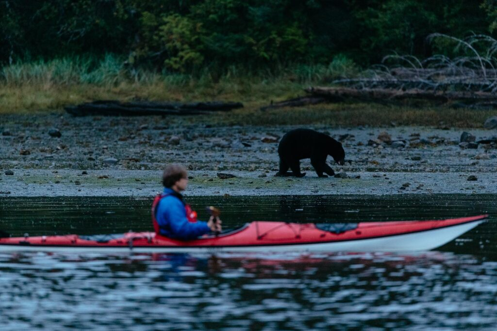 Canoe with bear in the background